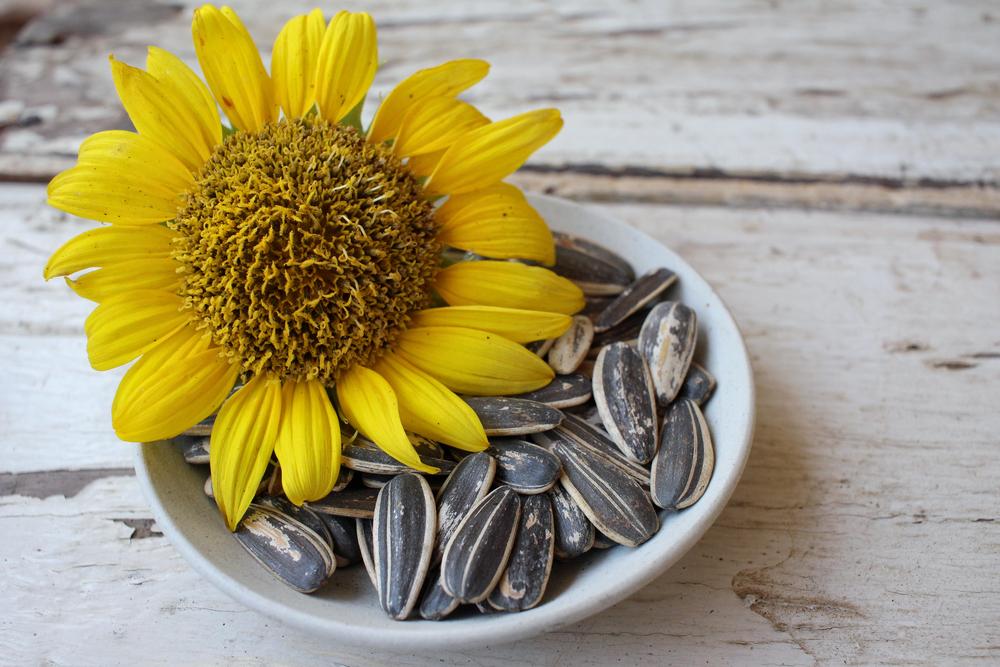 Bahan Alami Tinggi Vitamin E untuk Kulit Sehat dan Cerah